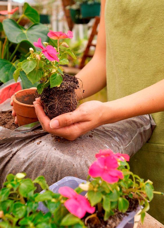 уход комнатных растений
