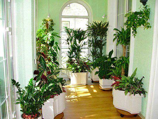 комнатные растения на западной стороне