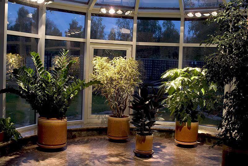 комнатные растения освещение
