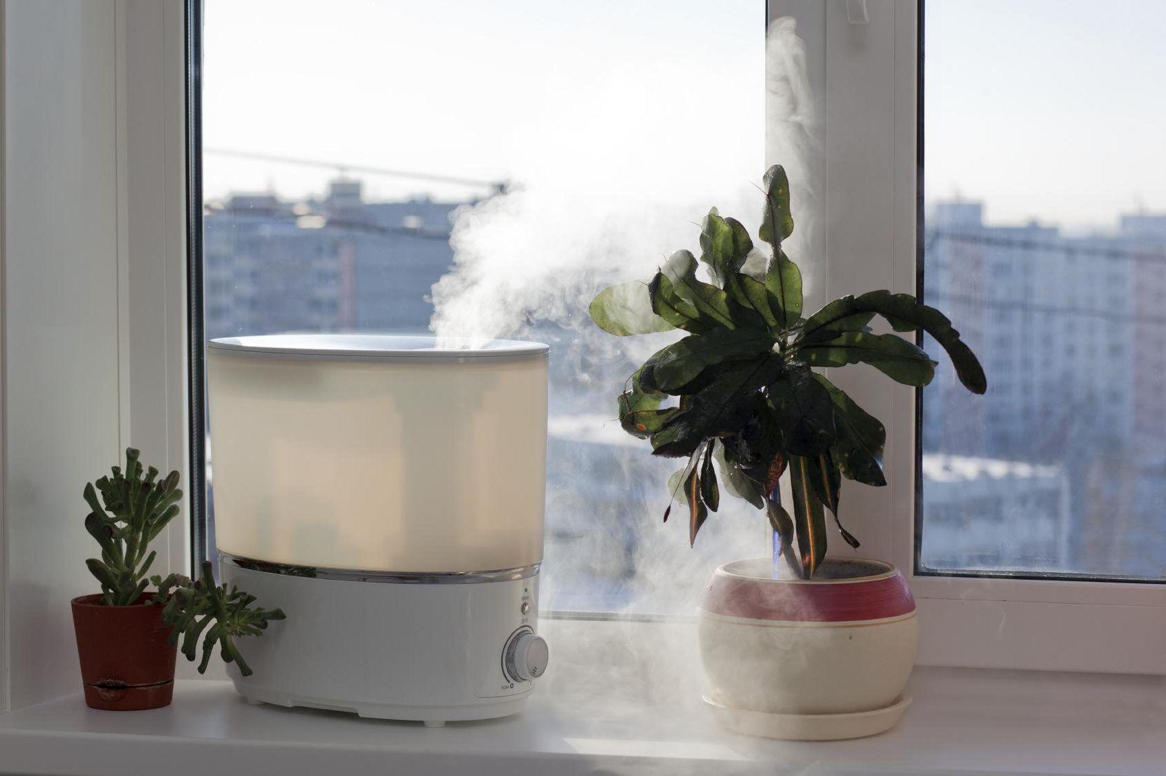 свежий Воздух для растений