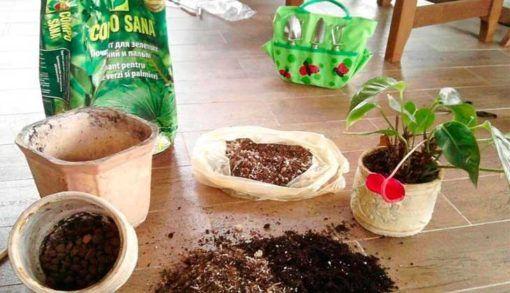 АНТУРИУМ почва