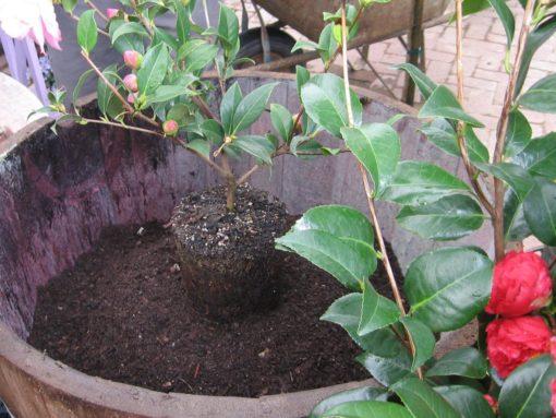 Каллизия почва